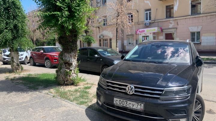 Ну подумаешь, деревце росло: волгоградские автохамы уничтожают зелень во дворах и на улицах