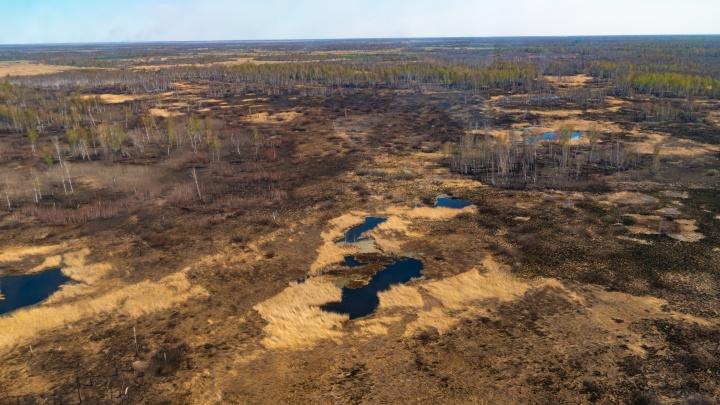 Леса, где блуждал министр: как выглядит Омская область с высоты птичьего полета