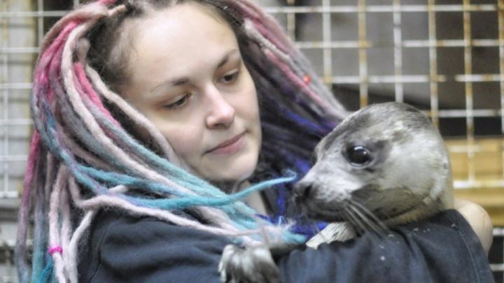 Центр помощи диким животным «Мата-Мата» в Архангельске заявил о прекращении деятельности