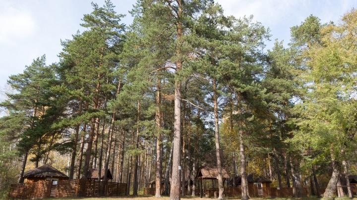 Природа и город: каким будет квартал в 10 минутах от одного из самых больших лесопарков области