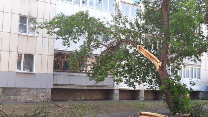 До конца года в Кургане вырубят 75 деревьев