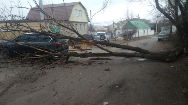 «Повезло, что людей не было»: в Волгограде рухнувшее дерево раздавило дорогую иномарку