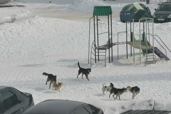 Собаки не против порезвиться и на детской площадке