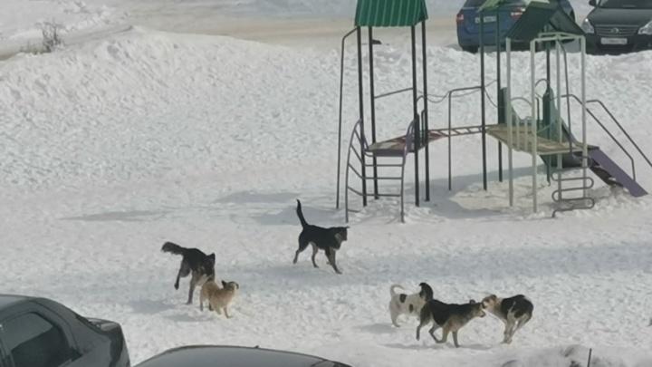 «Не дают выйти из подъезда и даже рычат»: в Башкирии стая собак держит в ужасе местных жителей