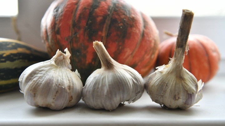 Как правильно сажать чеснок и лук под зиму: простые советы агронома для хорошего урожая