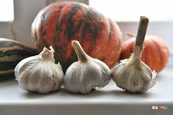 Конец сентября — начало октября — это самое время для посадки озимого чеснока