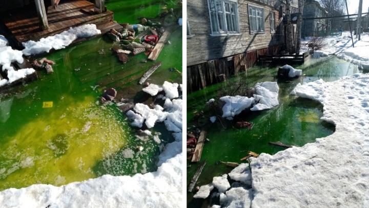 «У нас такого кошмара нет»: гостью Архангельска шокировало зеленое болото вокруг жилого дома