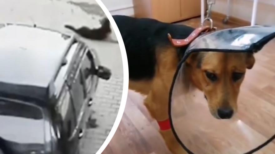 На мужчину, который переехал собаку на заправке в Арамиле, отказались заводить дело