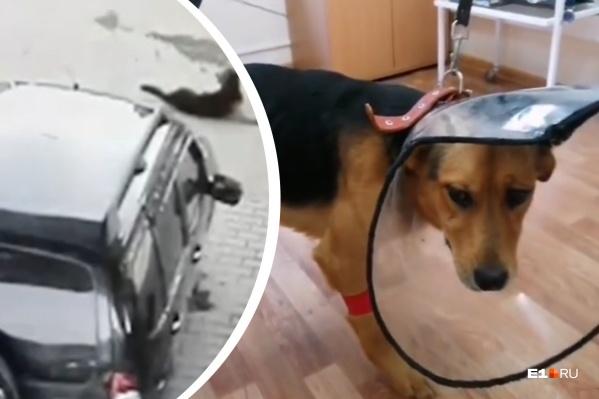 Пес бы не выжил без операции. Она обошлась волонтерам фонда в 32,6 тысячи рублей