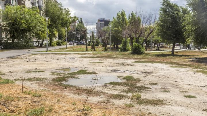 «Сажать новые деревья — нецелесообразно»: администрация заявила, что вырубит остатки сквера в центре Волгограда