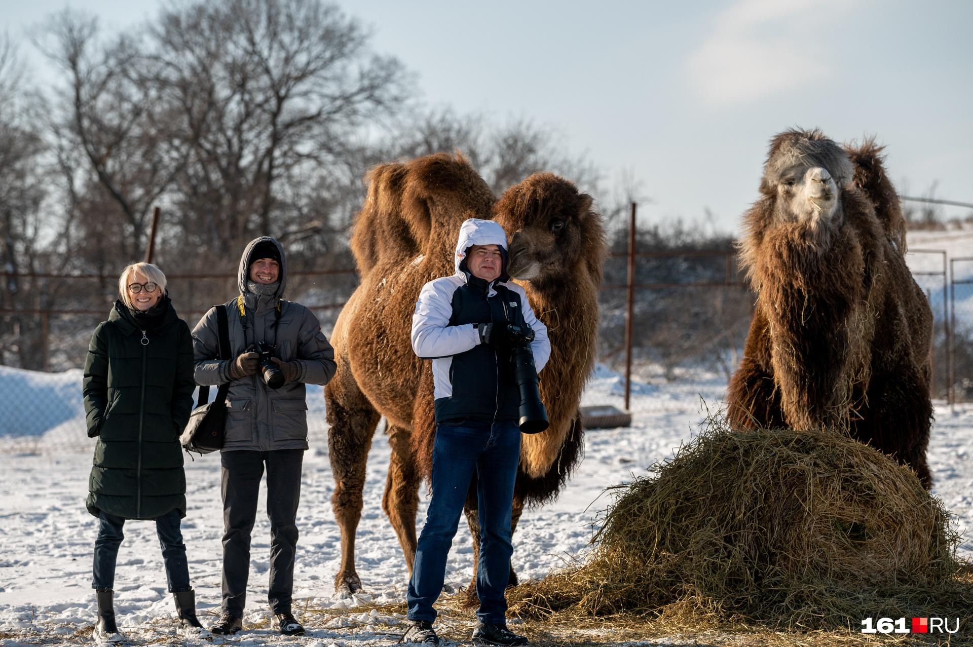Наша делегация и верблюды