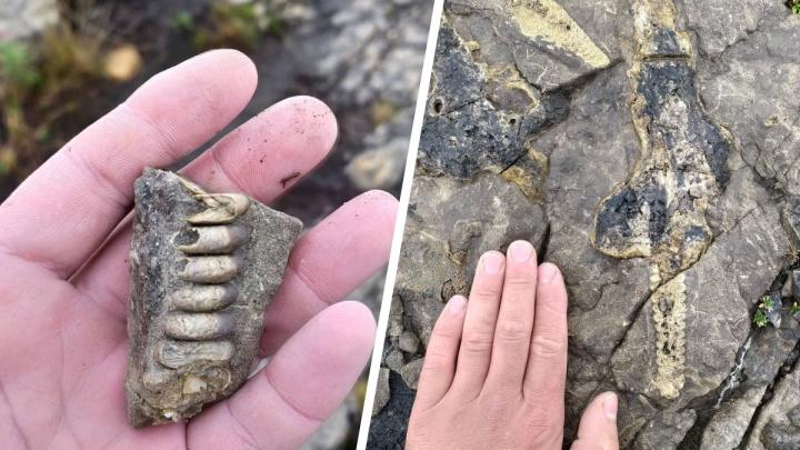 «Вымерли около 200 миллионов лет назад»: норильчанин нашел окаменелости древних морских обитателей
