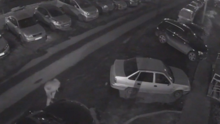 Опубликовано видео массового прокола шин в Советском районе: всего пострадали 14 авто