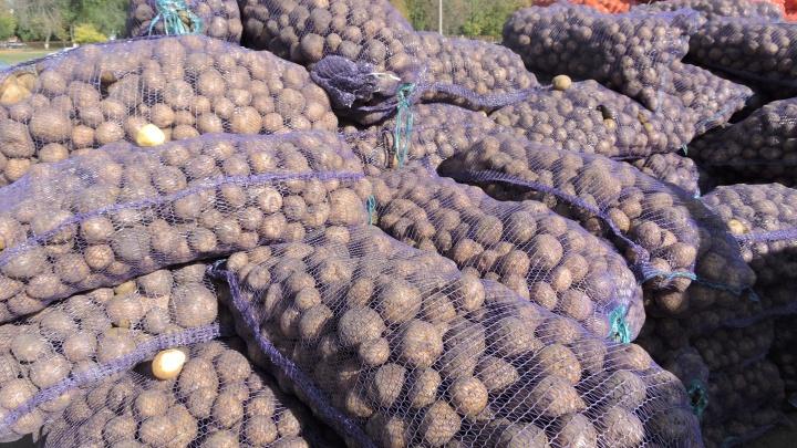 От 100 рублей и выше: торговцы спрогнозировали рост цен на картофель в Самарской области
