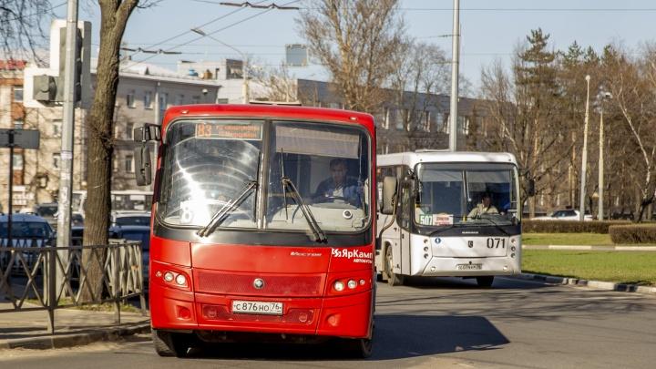 Москвичи и местные: какие перевозчики собираются работать в Ярославле после транспортной реформы