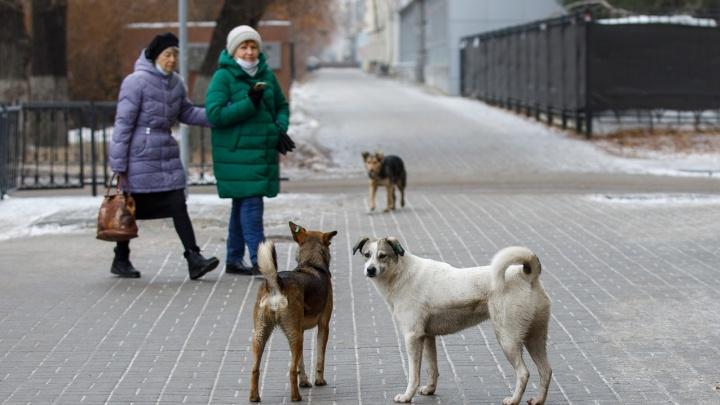 Снег с дождем, морось и туманы: смотрим погоду в Волгоградской области на 3 января