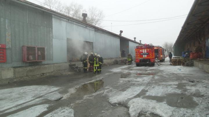 Погибли сотни животных: в Екатеринбурге произошел пожар в подпольном террариуме