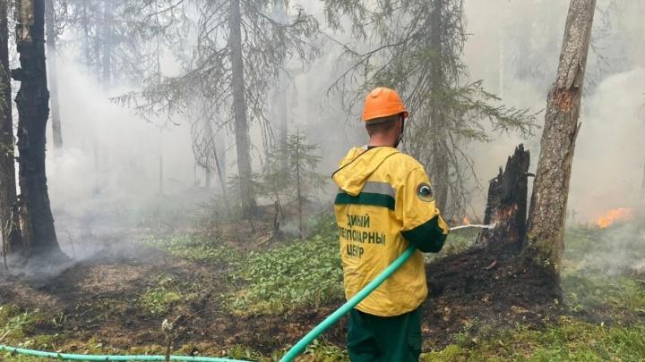Архангельской области выделили 93 миллиона рублей на борьбу с лесными пожарами