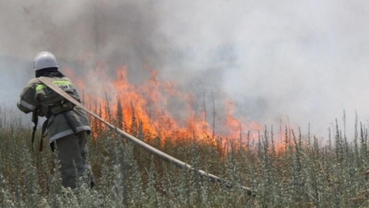 Край получил 5 млрд на создание лесопожарного центра на базе Черемшанки