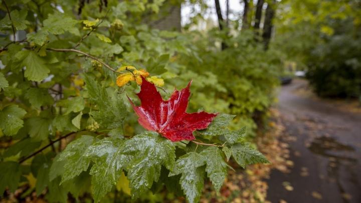 Пик похолодания пройден, впереди бабье лето! Метеорологи дали прогноз на конец сентября — начало октября