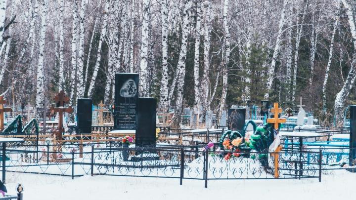 В Старом Кировске срубят почти полторы тысячи деревьев, чтобы расширить кладбище
