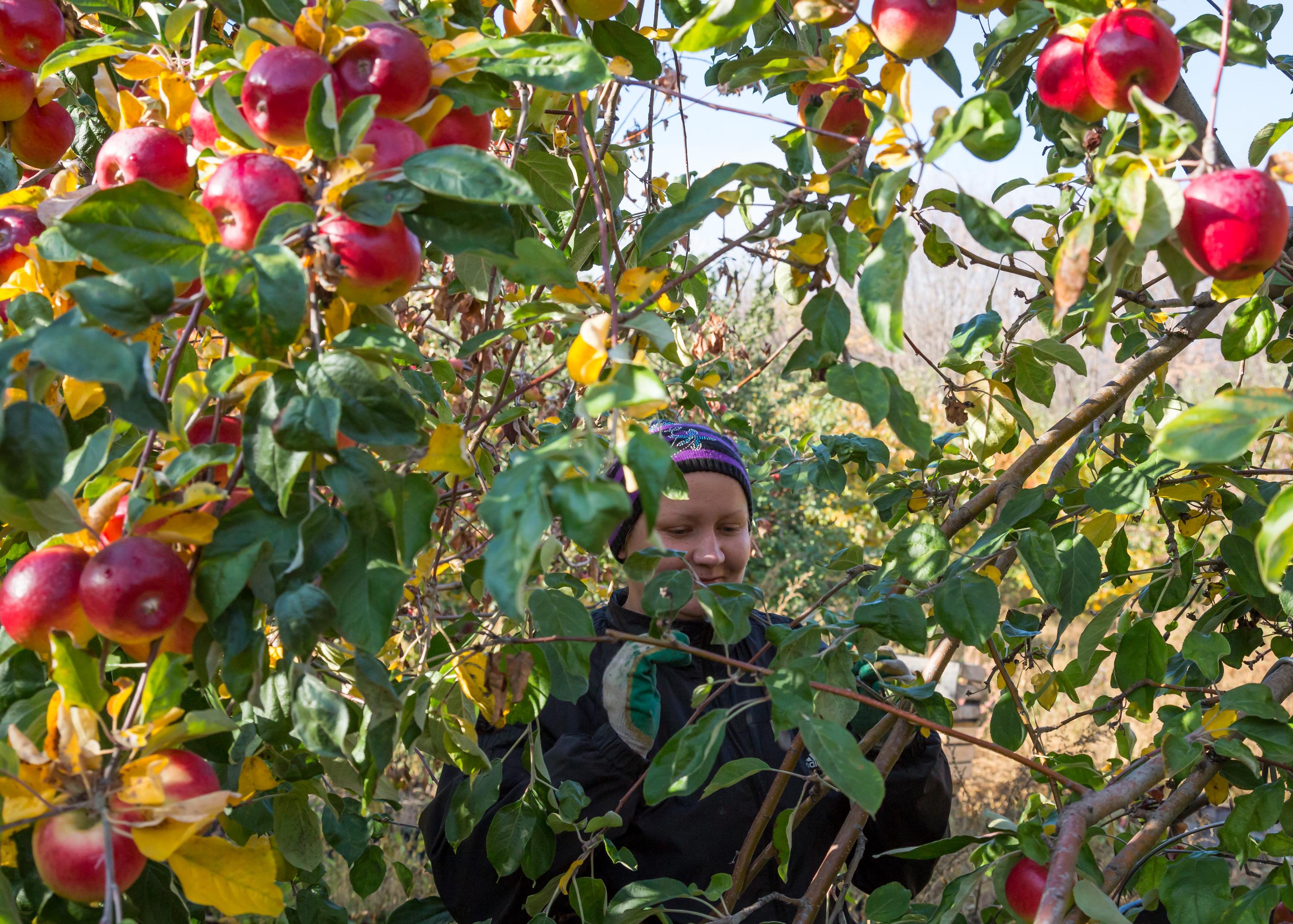 Для всех, кто не хочет покидать сад даже с наступлением осени, у нас есть отличный огородный план до самой зимы!
