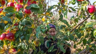 Чем заняться в саду осенью: подробная инструкция для неугомонных фермеров