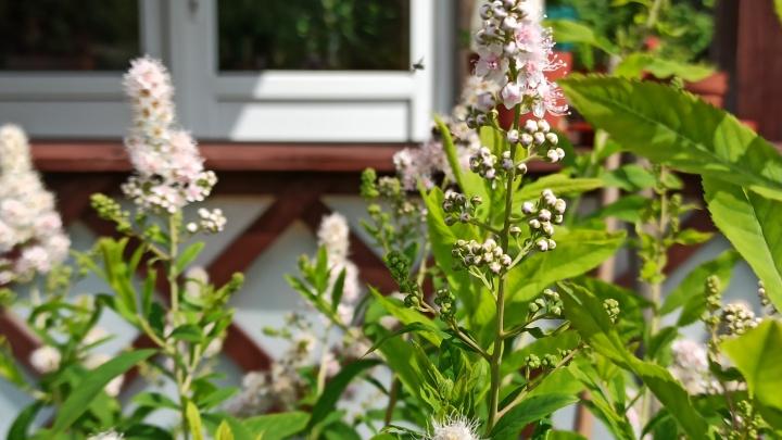 Делаем классную дачу за три копейки: как своими руками преобразить садовый участок