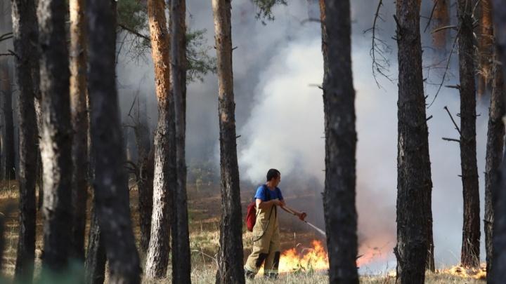 МЧС спрогнозировало сильные лесные пожары в Ростовской области