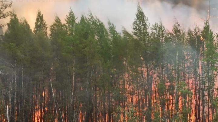 В Якутии тушат лесные пожары, из-за которых в Сургуте и других городах Югры появились дымка и запах гари