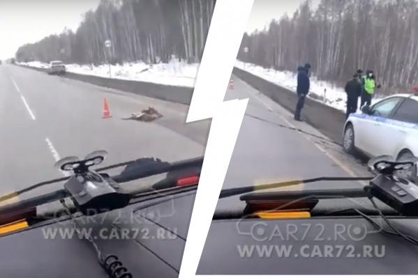 После наезда автомобиля животное отбросило под колеса другой машины. Травмы для косули оказались смертельными