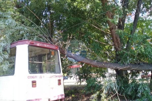 Упавшее дерево оборвало контактную сеть