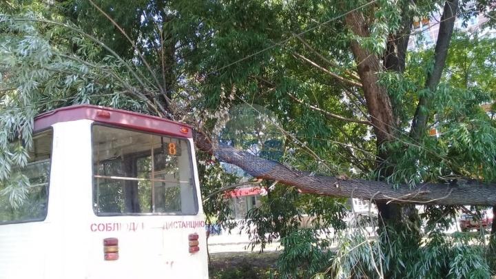 В Ленинском районе остановлено движение трамваев из-за упавшего на вагон дерева