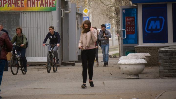Жителей Омской области предупредили о сильном ветре