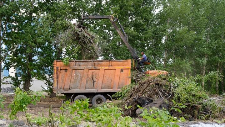 В Челябинске вырубка деревьев под школу бокса Сергея Ковалева переросла в уголовное дело