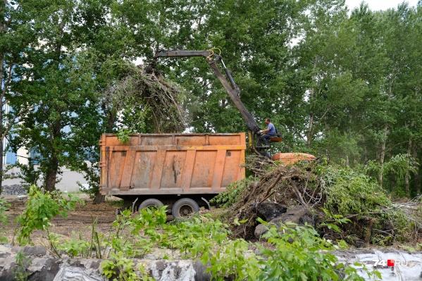 Участок, где рубили деревья, значится как часть парка у Центрального стадиона. Уничтоженную зелень вывозили оттуда машинами