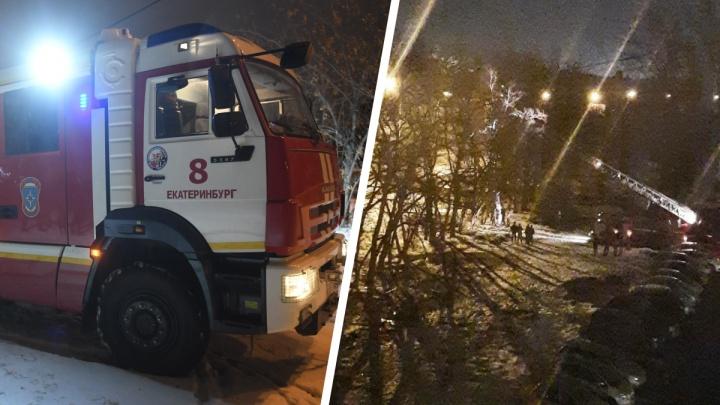 «Залез на самую верхушку в одних трусах!» Ночью в Екатеринбурге спасатели сняли с дерева мужчину