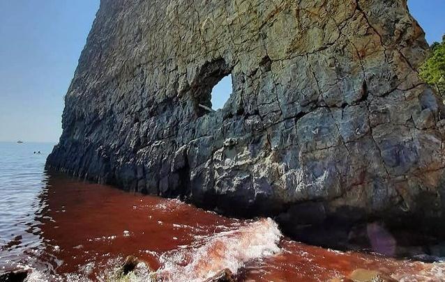 Под Геленджиком море окрасилось в красный цвет. Узнали, как это связано с нашествием божьих коровок и недавним наводнением