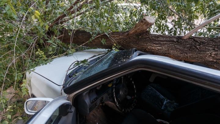 «Хорошо, что меня в тот момент в машине не было»: в Волгограде дерево проломило крышу легкового автомобиля
