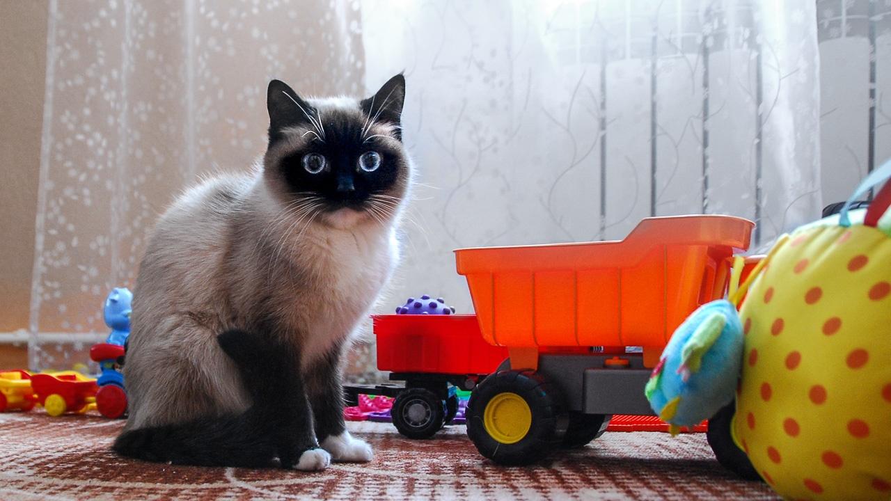 «Всё у них как не у людей», — прокомментировала кошка