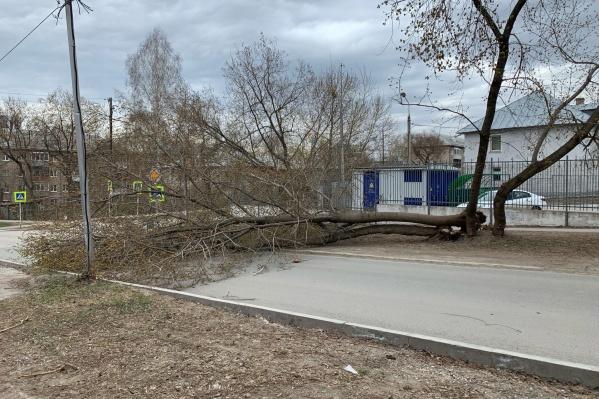 На пересечении улиц Дениса Давыдова и Нефтяников упало дерево
