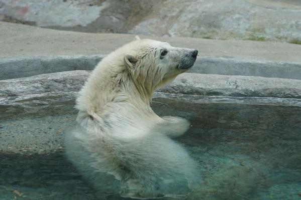 С апреля Хатанга проходит реабилитацию в московском зоопарке