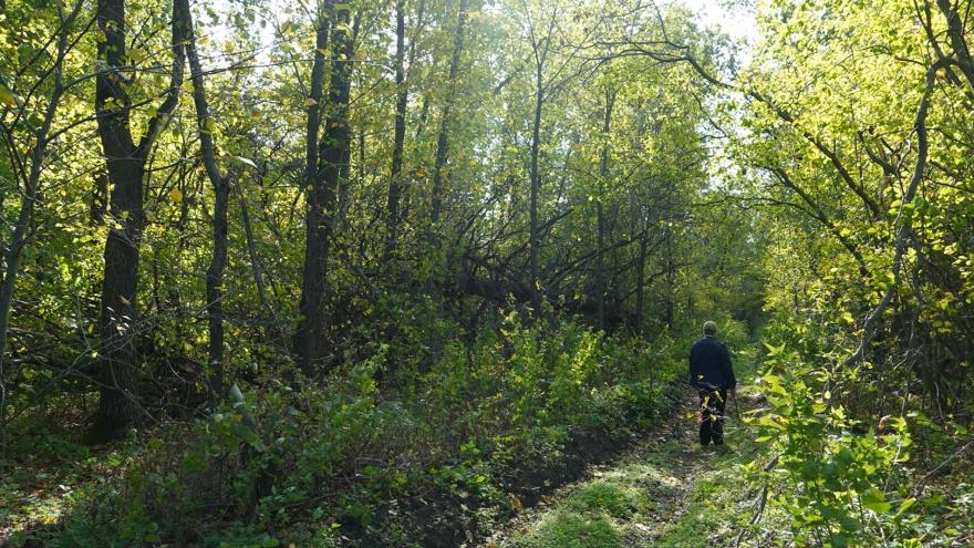 В Самарской области леса обработают пестицидами