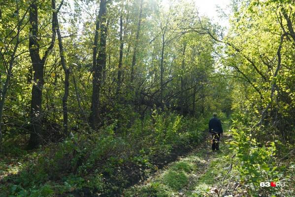 Прогулки в лесах будут под запретом три недели