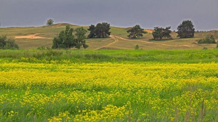 Цветущие поля и вереницы сельских дорог: волгоградский фотограф показала наступление лета на Хопре
