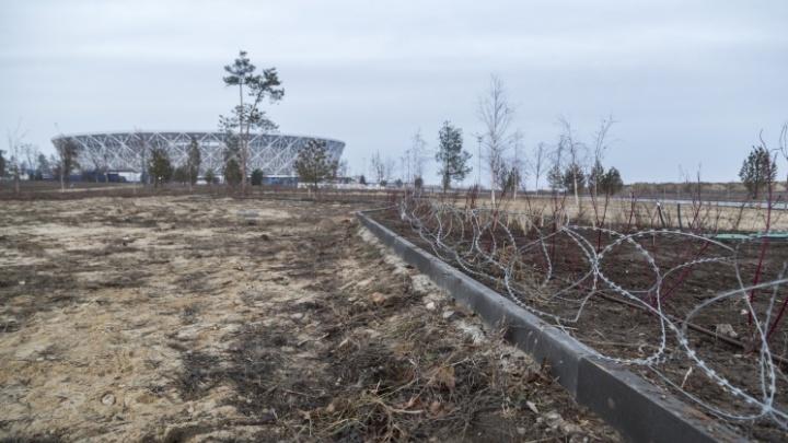 «Более 80 деревьев уже точно погибли»: облысевший ЦПКиО Волгограда проверяют агрономы