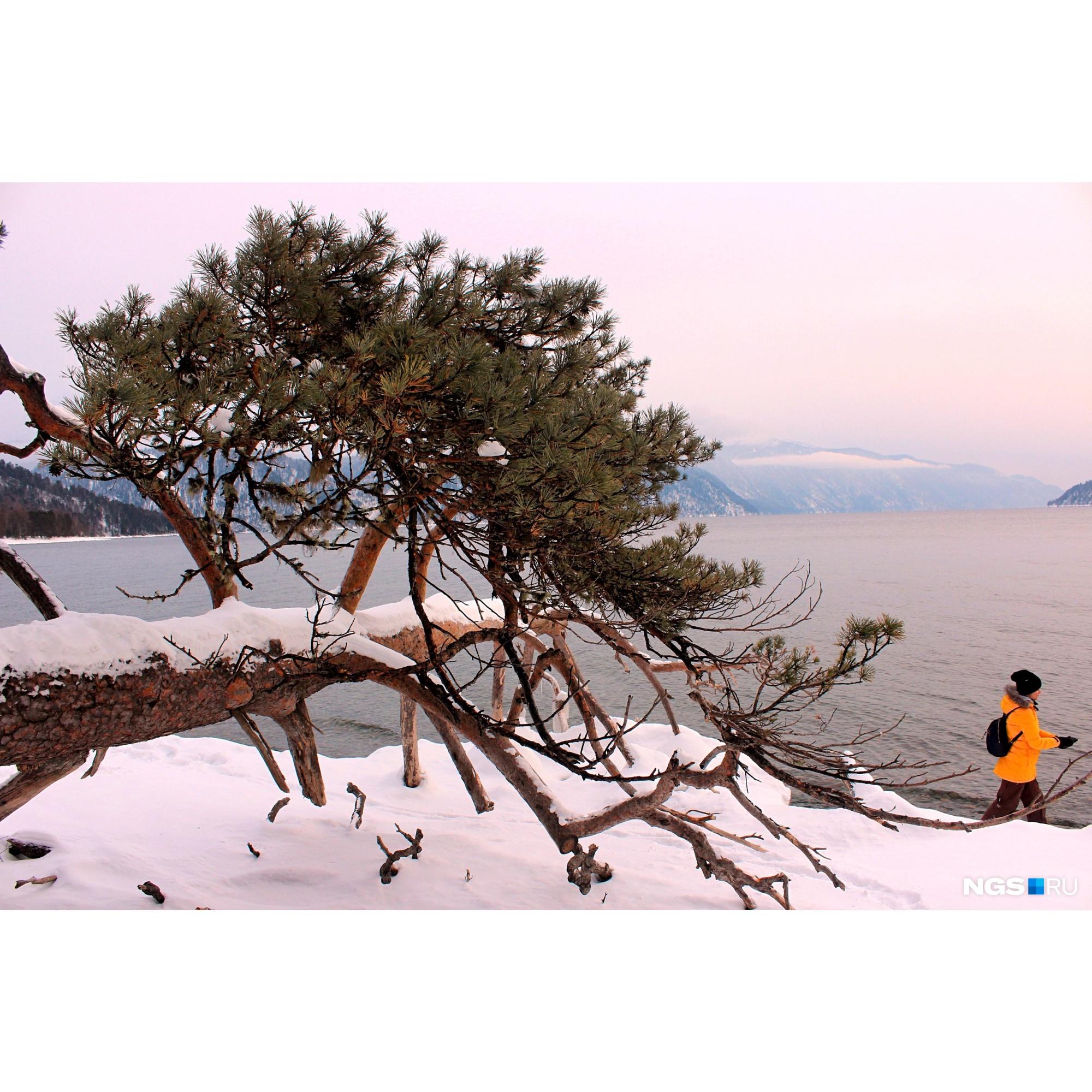 Вид на Телецкое озеро