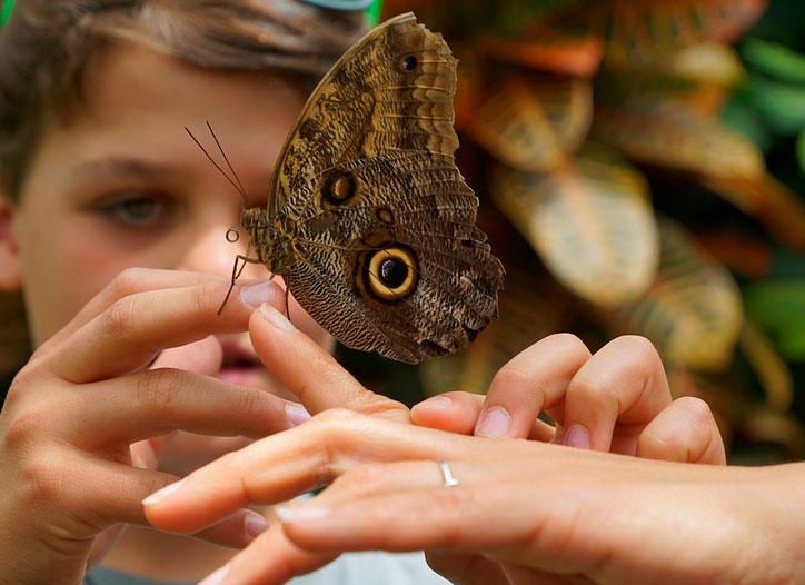 Планета «бабочек». Россиянам расскажут…