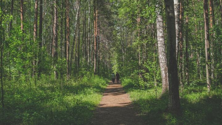 В Прикамье ограничили посещение лесов из-за аномальной жары. Куда нельзя ходить — список