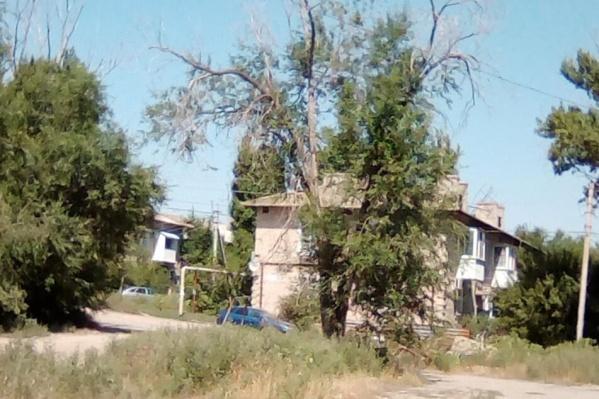 Засыхающие деревья угрожают жителям поселка имени Саши Чекалина